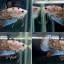 """(ขายแล้วครับ)""""คัดเกรด""""ปลากัดครีบสั้น-Halfmoon Plakats Fancy Koi thumbnail 1"""