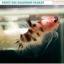 """""""คัดเกรด""""ปลากัดครีบสั้น-Halfmoon Plakats Fancy Koi thumbnail 2"""