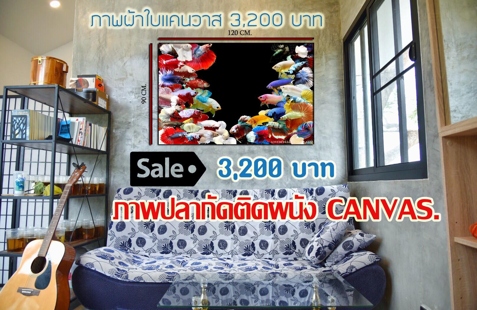 ภาพพิมพ์ปลากัดติดผนังเสริมฮวงจุ้ยภาพผ้าใบงานพิมพ์แคนวาส งานระดับ HD คุณภาพสูงไฟล์ใหญ่ ขนาด 120 cm. * 90 cm.