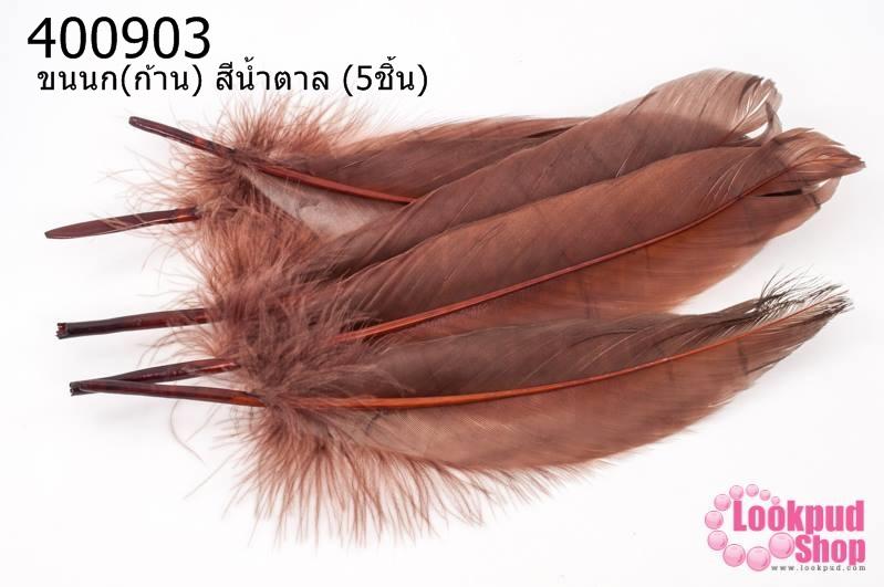 ขนนก(ก้าน) สีน้ำตาล (5ชิ้น)