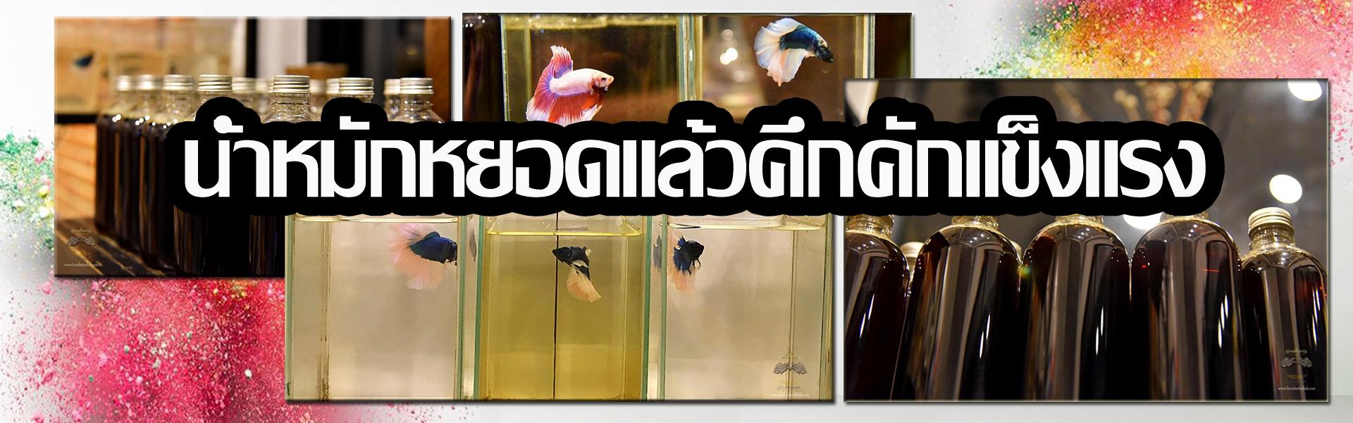 น้ำหมักใบหูกวางสูตรเข้มข้น LoveBettaFish