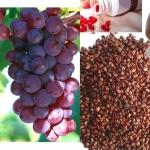 สารสกัดจากเมล็ดองุ่น Grape Seed สารต้านอนุมูลอิสระเพื่อสุขภาพดี