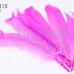 ขนนก(ก้าน) สีชมพู (5 ชิ้น)