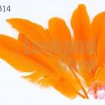 ขนนก(ก้าน) สีส้ม (5 ชิ้น)