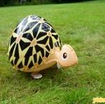 Turtle Walking Balloons - คุณเต่าน้อยบอลลูน / TL-K012
