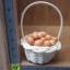 ตระกร้าไข่ไก่(แม่เหล็ก) thumbnail 1