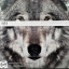 Thirty seconds to mars - this is war ( NEW2 LP.) thumbnail 2