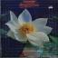 วงดนตรีเยาวชนแสงเทียน - ดอกไม้คุณธรรม thumbnail 1