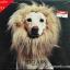 CD Big Ass - The Lion thumbnail 1