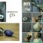 ชุดของแต่งบ้าน ครอบครัวช้างน้อย DIY Set (ทำได้ 7 แบบ) thumbnail 4