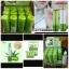 Aloe Vera 99% Soothing Gel Lipstick ลิปบาล์มอโลเวร่า (ยกกล่อง) ราคาปลีก 200 บาท / ราคาส่ง 160 บาท thumbnail 3